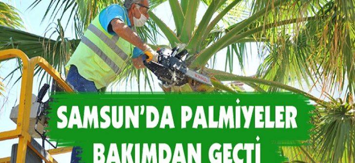 Samsun'da Palmiyeler Bakımdan Geçti