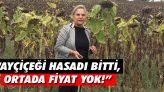 """""""Ayçiçeği Hasadı Bitti, Ortada Fiyat Yok!"""""""